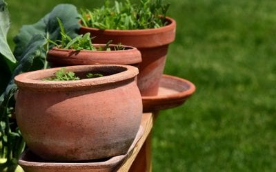 Tips for Container Gardening Success